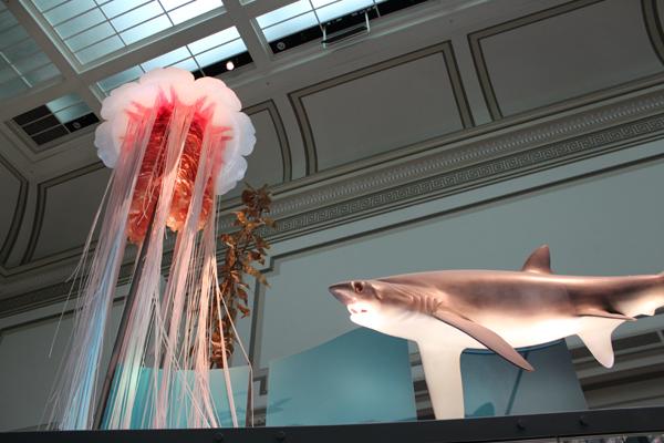 Um tubarão e a Água-viva...