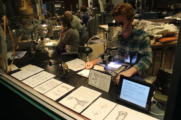 Um funcionário registrando observações em desenhos... Os demais atrás estão limpando um fóssil...