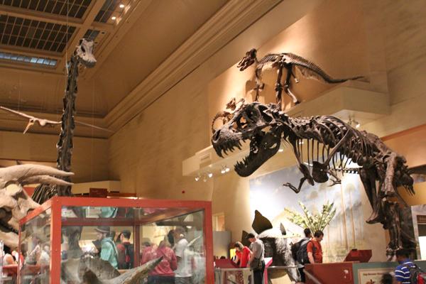 O impressionante salão dos Dinossauros com 46 dinos inteirinhos!!!