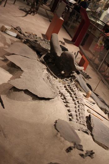 A História Natural aborda a Paleontologia, que muito me impressiona... É uma rocha? Não, isso é um fóssil de dinossauro!!!