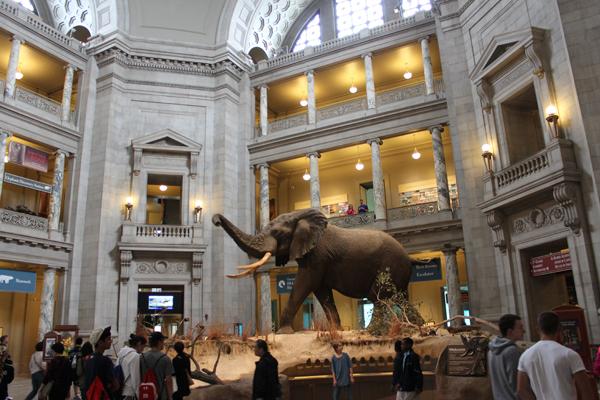 A grande rotunda e o Elefante - a estrela deste salão...