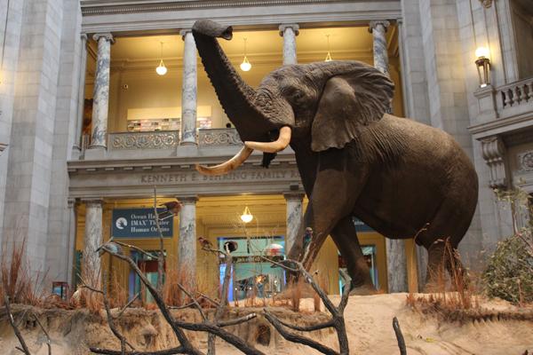 Destaque para o Elefante e sua posição de alerta...