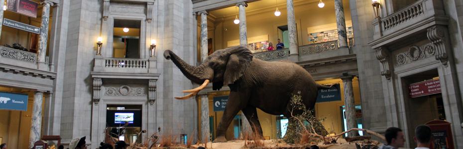 Um dia no Museu de História Natural em Washington