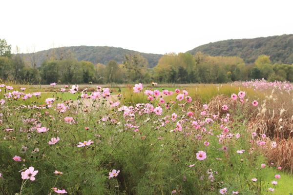 Finalizando o passeio com esta paisagem do terreno que o ônibus de Giverny te deixa.