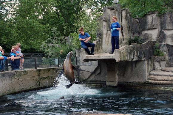 Vamos ao Zoológico? Chegamos no momento certo - a hora da comida dos leões marinhos, com direito a show e tudo mais...