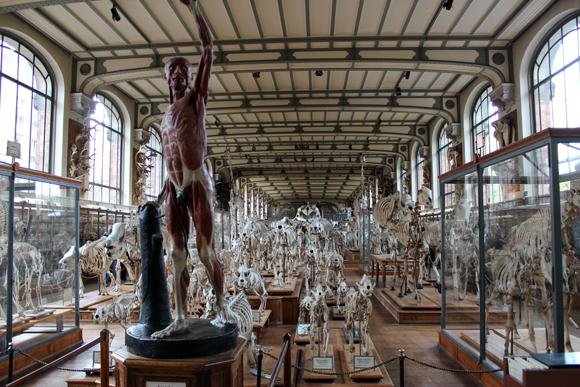 O Museu de História Natural um passeio bem legal em pleno Jardin dês Plantes.