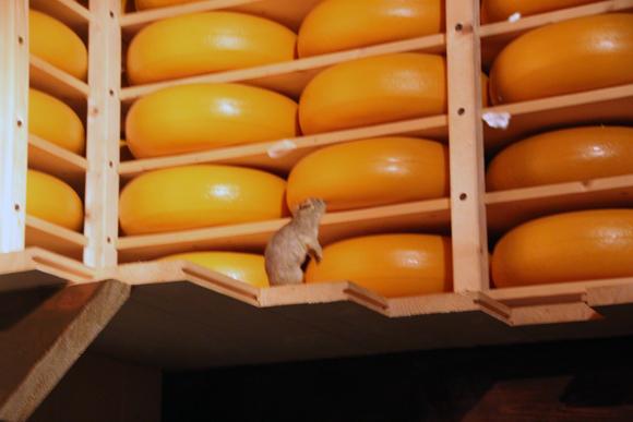 Estoque de muito queijo holandês para os navegadores Agora sim poderiam encarar uma viagem dessas... Pena que havia concorrência!