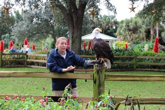 Uma águia também encanta os visitantes.