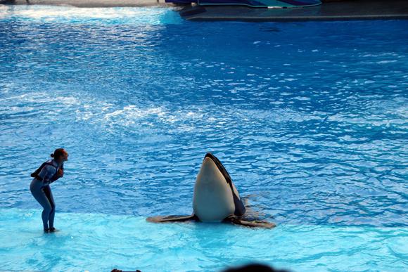 O melhor show do parque, One Ocean, com a Baleia Shamu.
