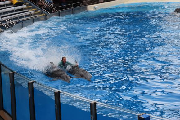 E mais golfinhos...