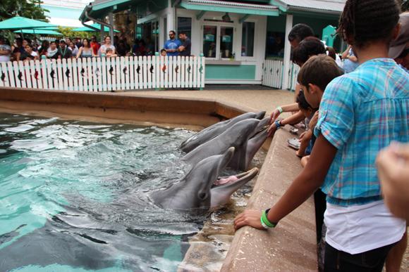 Alimentado os golfinhos no Dolphin Cove.