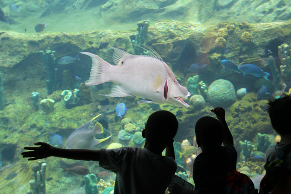 Crianças observam curiosas um peixe diferente.