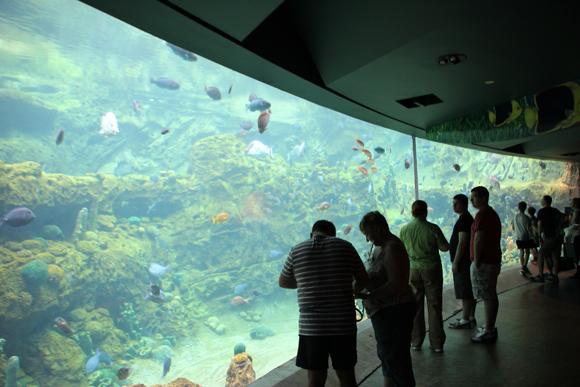 Um imenso aquário de peixes e tartarugas.