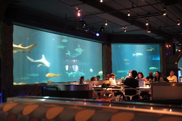 Um almoço bem diferente com os tubarões...