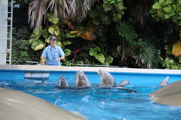 O berçário dos golfinhos...