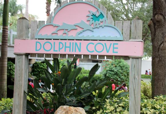 Dolphin Cove, onde você pode alimentar os golfinhos no SeaWorld