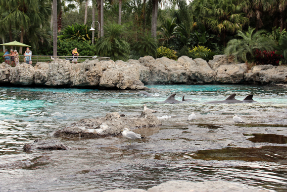 Não, não são tubarões. (Falamos destes neste post). Esses daqui são golfinhos...