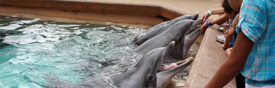 Alimentando os golfinhos no SeaWorld de Orlando