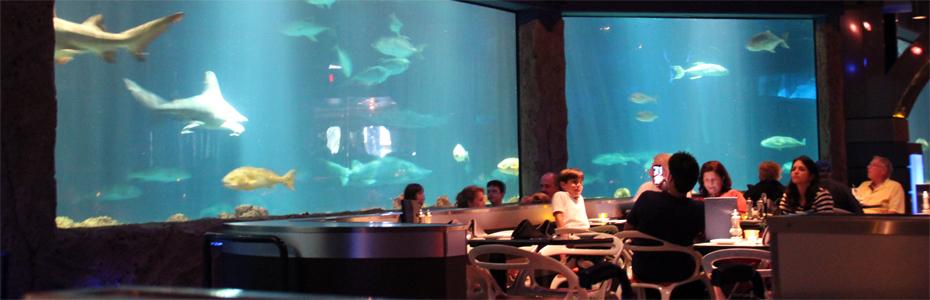 Almoçando com os tubarões no SeaWorld, Orlando